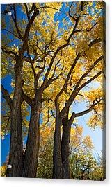Autumn Color Acrylic Print by Allen Lefever
