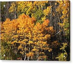 Autumn Color At The Continental Divide Acrylic Print by Kae Cheatham