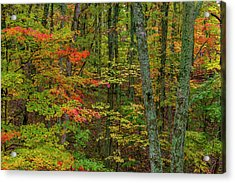 Autumn Color In Brown County State Acrylic Print by Chuck Haney