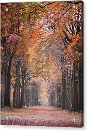 Autumn - Colorful Red Green Orange Nature Landscape Fine Art Photography Acrylic Print by Artecco Fine Art Photography