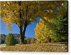 Autumn Colors Acrylic Print by Brian Jannsen