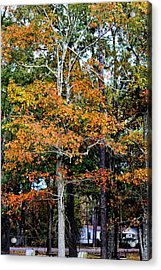 Autumn Colors Acrylic Print by Carolyn Ricks