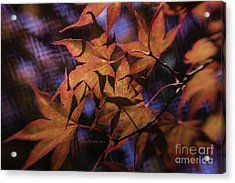 Autumn Colors Acrylic Print by Jean OKeeffe Macro Abundance Art