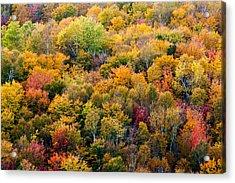 Autumn Colors Acrylic Print by Matt Dobson