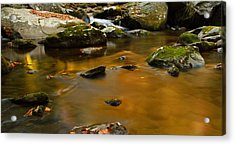 Autumn Colors On Little River Acrylic Print by Dan Sproul