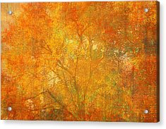 Autumn Colors Acrylic Print by Suzanne Powers