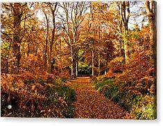 Autumn Colour Acrylic Print
