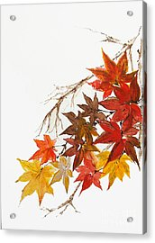 Autumn Colour Acrylic Print