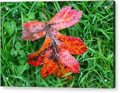 Autumn Colours. Acrylic Print