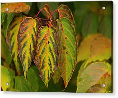 Autumn Colours Acrylic Print by Jacqui Collett