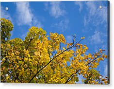 Autumn Colours On An October Morning . Acrylic Print