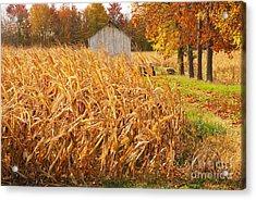 Autumn Corn Acrylic Print by Mary Carol Story