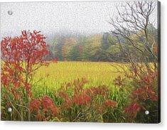 Autumn Cornfield II Acrylic Print by Tom Singleton