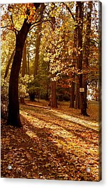 Autumn Country Lane Evening Acrylic Print
