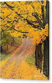 Acrylic Print featuring the photograph Autumn Country Road by Alan L Graham