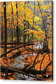 Acrylic Print featuring the photograph Autumn Creek In The Rain by Rodney Lee Williams