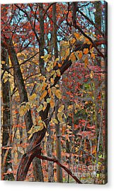 Autumn Day Acrylic Print by Jeff Breiman
