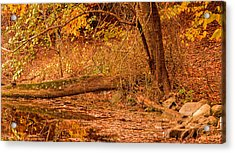 Autumn Day Acrylic Print by Lourry Legarde