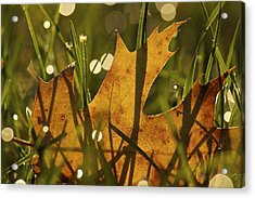 Autumn Dew Acrylic Print by Penny Meyers
