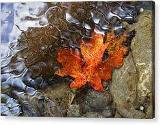 Autumn Down Under Acrylic Print