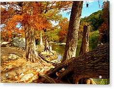 Autumn Dreams Acrylic Print by David  Norman