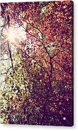 Autumn Dresses In Flame And Gold Acrylic Print by Kim Fearheiley