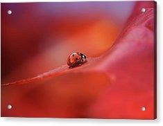 Autumn Acrylic Print by Ellen Van Deelen