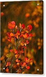 Acrylic Print featuring the photograph Autumn Emblem by Jeremy Rhoades