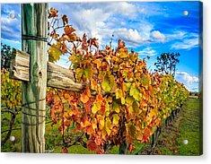 Autumn Falls At The Winery Acrylic Print by Peta Thames