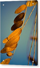 Autumn Feathers Acrylic Print by Dave Garner