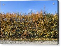 Autumn Fence Acrylic Print by Aleksandr Volkov