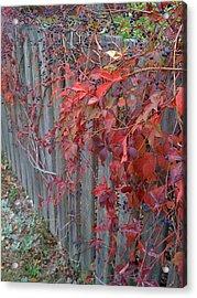 Autumn Fence Acrylic Print