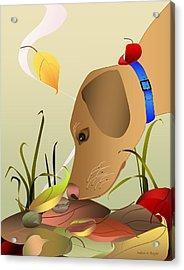 Autumn Find Acrylic Print by Debra Boyle