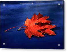 Autumn Fire Acrylic Print by Leena Pekkalainen