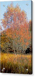 Autumn Fires Acrylic Print by Jim Pavelle