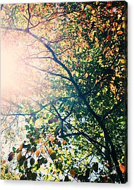 Acrylic Print featuring the photograph Autumn Flame by Kim Fearheiley