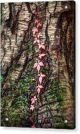 Autumn Flavor - Colorful Fall Foliage Acrylic Print by Gary Heller