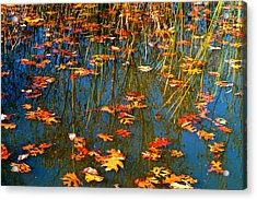 Acrylic Print featuring the photograph Autumn  Floating by Peggy Franz