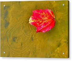 Autumn Floats Acrylic Print