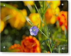 Autumn Flower Acrylic Print by Jay Nodianos