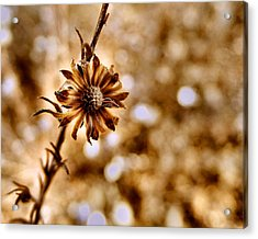 Autumn Flower Acrylic Print
