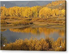 Autumn Foliage Surrounds A Pool In The Acrylic Print by David Ponton