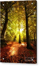Autumn Forest Acrylic Print by Boon Mee