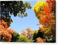 Autumn Forest Colors Acrylic Print by Boon Mee