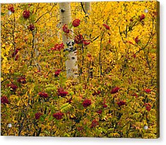 Autumn Forest Colors Acrylic Print by Leland D Howard