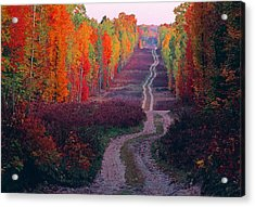 Autumn Forest Road Acrylic Print