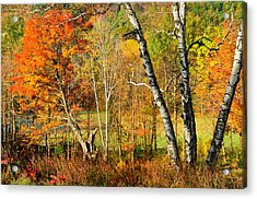 Autumn Forest Scene - Litchfield Hills Acrylic Print by Expressive Landscapes Fine Art Photography by Thom