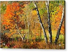 Autumn Forest Scene - Litchfield Hills Acrylic Print by Thomas Schoeller