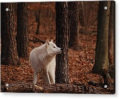 Autumn Gaze Acrylic Print by Lori Tambakis