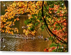 Autumn Geese Abstract Acrylic Print by Kathi Isserman